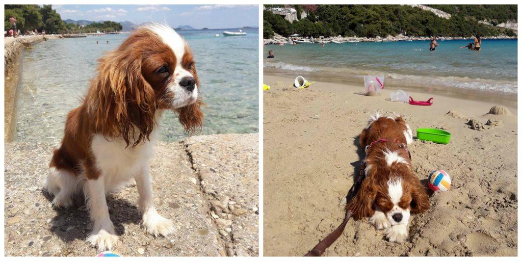 wakacje pies na plazy